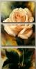 Цветочные композиции_4